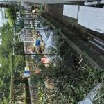 埼玉県さいたま市 空き地の放置物、剪定枝等の処分